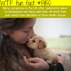 pawternity leave wtf fun facts