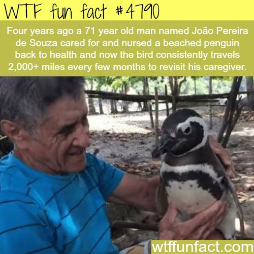 Penguin travels 2