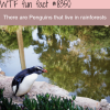 penguins living in rainforests wtf fun facts