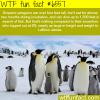 penguins taller than lebron james wtf fun facts