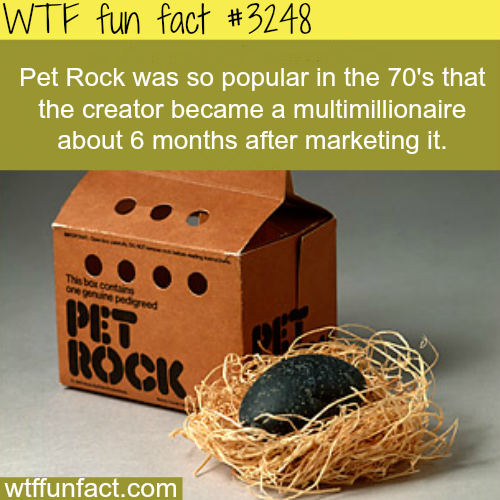 Pet Rock -  WTF fun facts