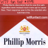 philip morris wtf fun facts