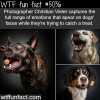 photographer captures the face of dogs before