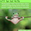 photographs by tanto yensen wtf fun fact
