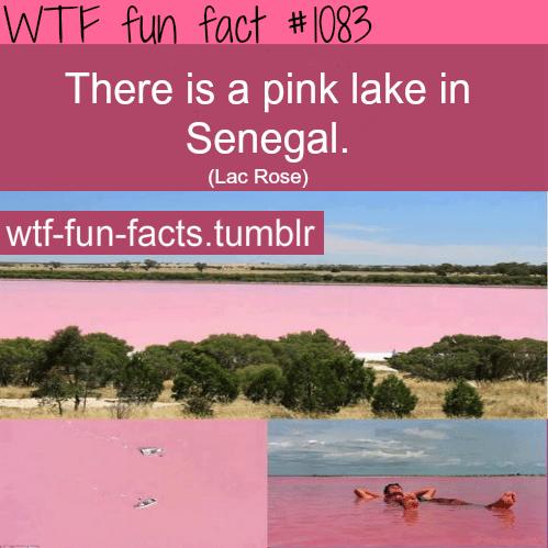 pink lake inSenegal -Lake_Retba ( Lac Rose)