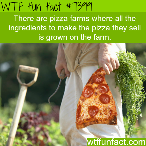 Pizza Farms - FACTS