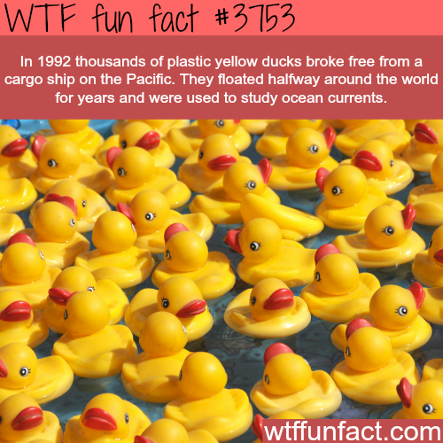 Plastic ducks float halfway across the world  - WTF fun facts