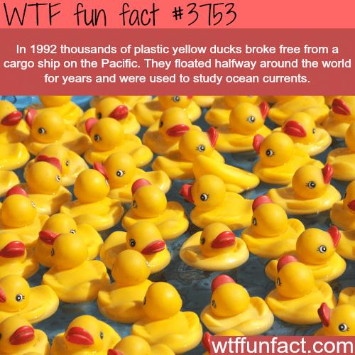 Plastic ducks float halfway across the world - WTF fun facts