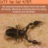 pseudoscorpions wtf fun facts