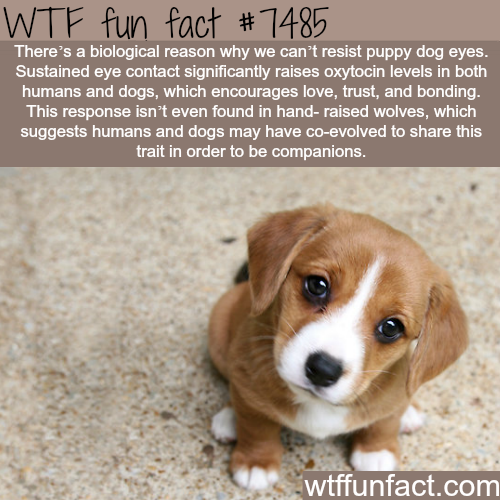 Puppy eyes - FACTS