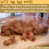 puppy pregnancy syndrome wtf fun facts