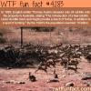 rabbits in australia wtf fun facts
