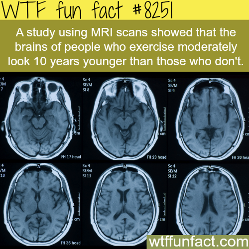 Reasons why you should exercise - WTF fun facts