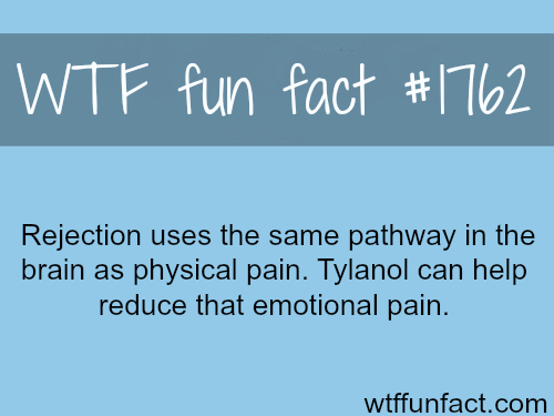 Rejection and physical pain -WTF fun facts