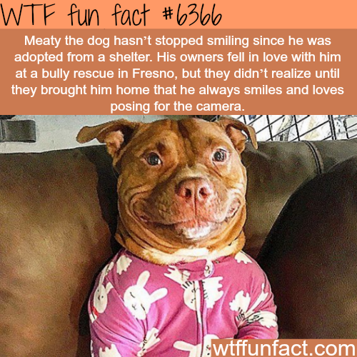 Rescue dog can't stop smiling - WTF fun facts