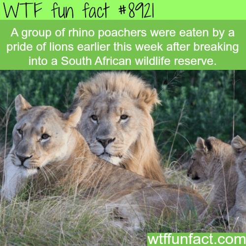 Rhino's poachers - WTF fun facts