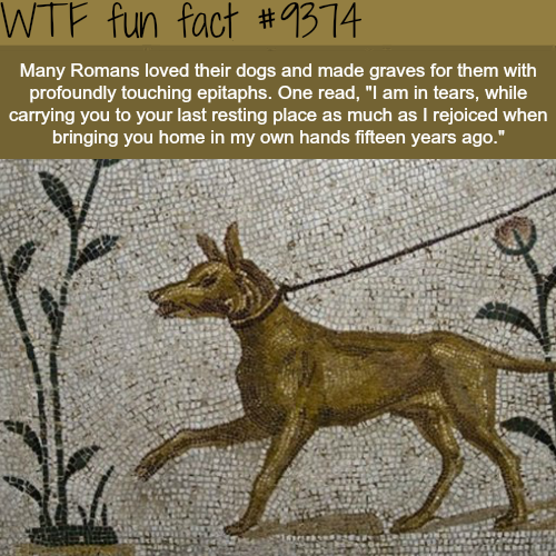 Romans loved their dogs and made graves for them… - WTF fun facts