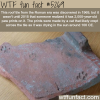 roof tile from roman era has cat paws on it wtf