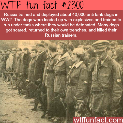 Russian Anti tank dogs -WTF funfacts