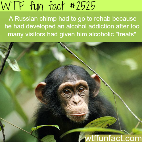 Russian Chips taken to rehab for drinking -WTF funfacts