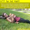sammy the campus cat wtf fun fact
