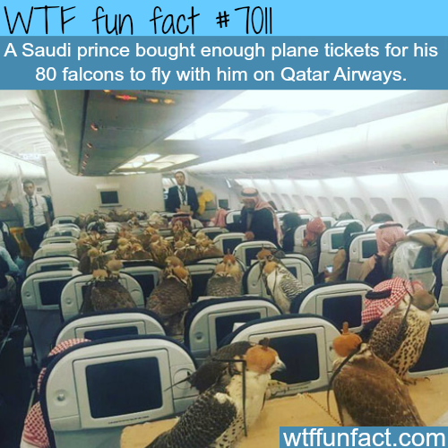 Saudi prince buys 80 tickets for his falcons - WTF fun facts