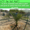 scientist grew an extinct tree from 2000 year old