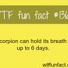 scorpion facts animals