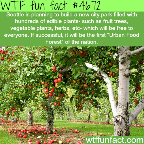 Seattle's food forest - WTF fun facts