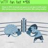 self control wtf fun facts