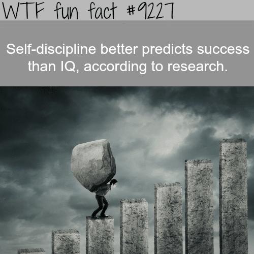 Self-Discipline - WTF Fun Fact