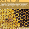 serial killers behave like bees wtf fun facts
