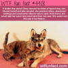 shelter dog rescued over 900 cats