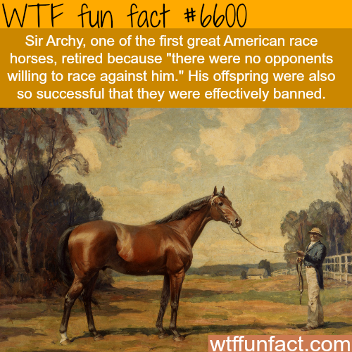 Sir Archy - WTF fun facts