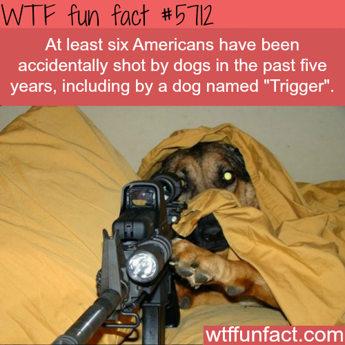 Six American's accidentally shot by their dogs in the past five years - WTF fun fact