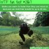 sloths swimming speed