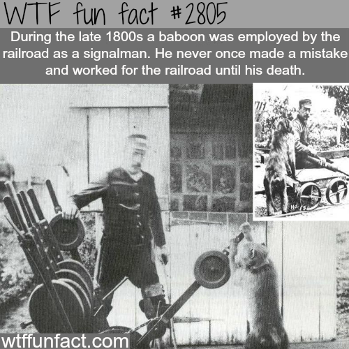 Smartest monkey in history - WTF fun facts