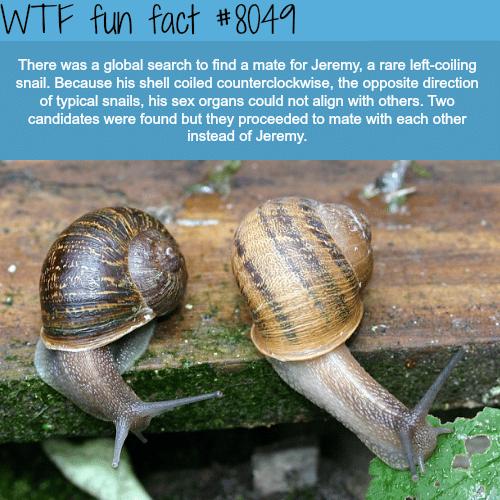 Snail gets friend-zoned - WTF fun fact