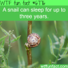 snails can sleep up to three years wtf fun fact