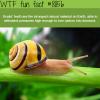 snails teeth wtf fun facts