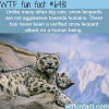 snow leopards wtf fun facts