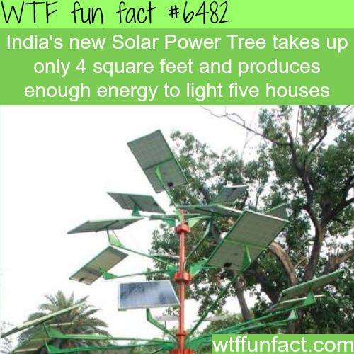 Solar Power Tree - WTF fun facts