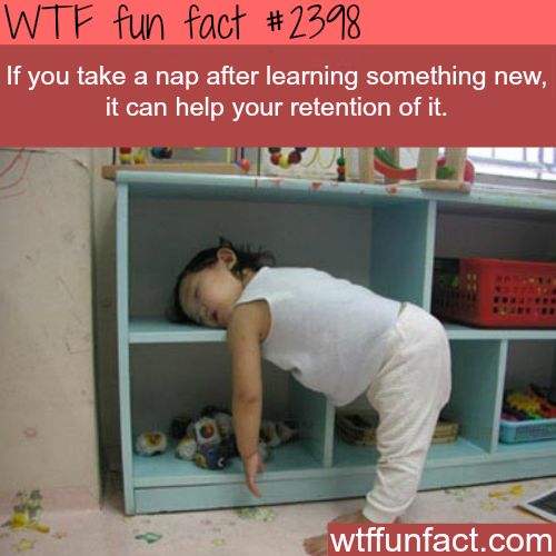 Some facts about Naps -WTF funfacts