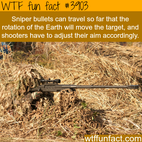 Some facts about sniping - WTF fun facts
