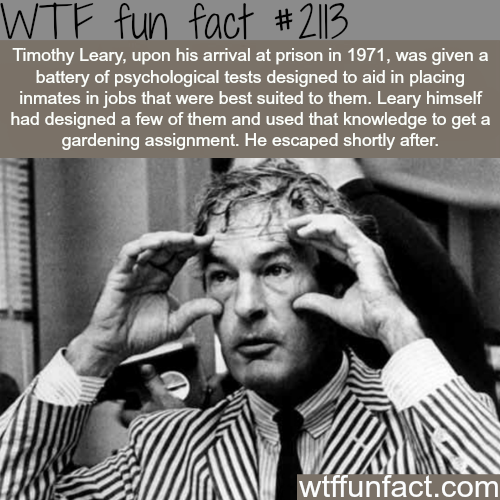 Some facts about Timothy Leary - WTF fun facts