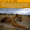 south china tiger wtf fun fact