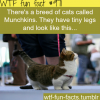 special cats breed