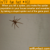 spiders are getting smarter and sneakier