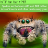 spiders facts wtf fun facts