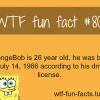 sponge bob wiki